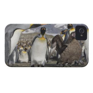 Antarctica, South Georgia Island (UK), Brown iPhone 4 Case-Mate Case