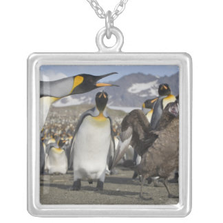 Antarctica, South Georgia Island (UK), Brown Silver Plated Necklace