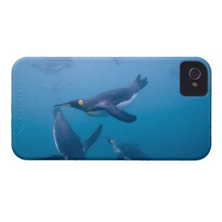 Antarctica, South Georgia Island (UK), iPhone 4 Case-Mate Case