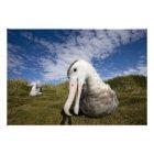 Antarctica, South Georgia Island UK), Curious Photo Print