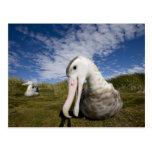 Antarctica, South Georgia Island UK), Curious Postcard