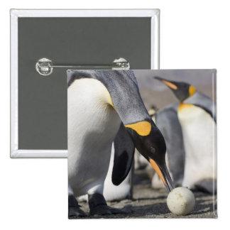 Antarctica, South Georgia Island (UK), King 10 2 Inch Square Button