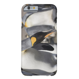 Antarctica, South Georgia Island (UK), King 10 Barely There iPhone 6 Case