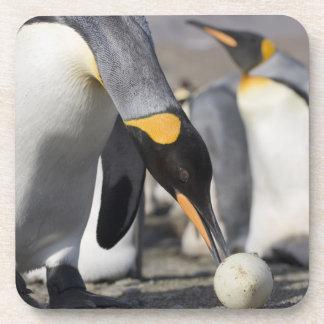 Antarctica, South Georgia Island (UK), King 10 Coaster