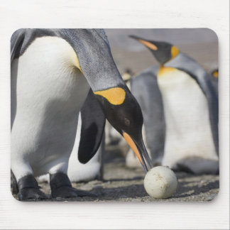 Antarctica, South Georgia Island (UK), King 10 Mouse Pad