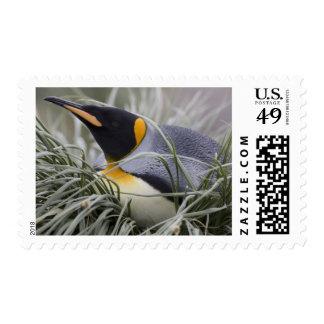 Antarctica, South Georgia Island (UK), King 11 Postage Stamp