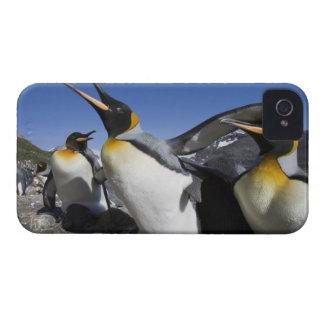Antarctica, South Georgia Island (UK), King 12 iPhone 4 Case-Mate Case