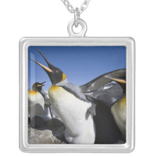 Antarctica, South Georgia Island (UK), King 12 Square Pendant Necklace