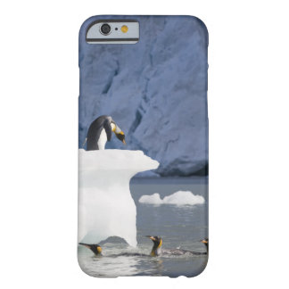 Antarctica, South Georgia Island (UK), King 13 Barely There iPhone 6 Case