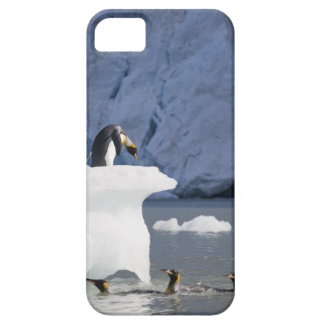 Antarctica, South Georgia Island (UK), King 13 iPhone 5 Case