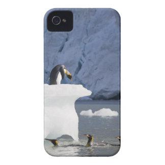 Antarctica, South Georgia Island (UK), King 13 iPhone 4 Case