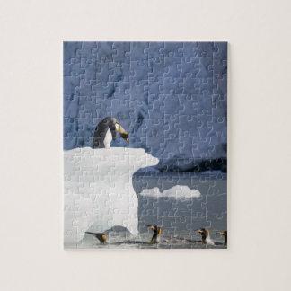 Antarctica, South Georgia Island (UK), King 13 Jigsaw Puzzle