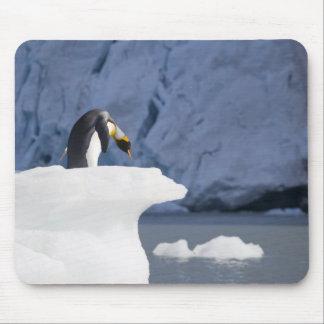 Antarctica, South Georgia Island (UK), King 13 Mouse Pad