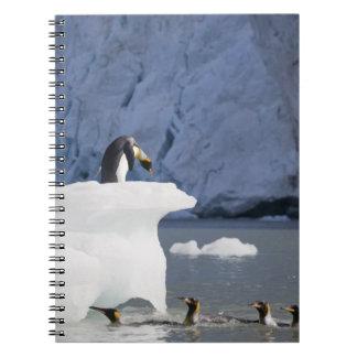 Antarctica, South Georgia Island (UK), King 13 Spiral Notebook