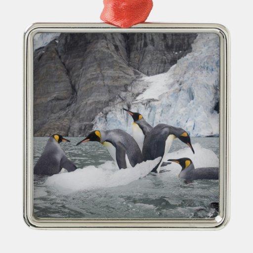 Antarctica, South Georgia Island (UK), King 14 Christmas Ornaments