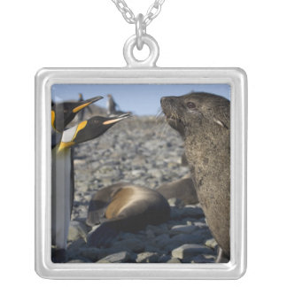 Antarctica, South Georgia Island (UK), King 15 Square Pendant Necklace