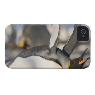 Antarctica, South Georgia Island (UK), King 16 iPhone 4 Case-Mate Case