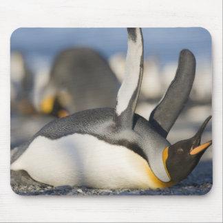Antarctica, South Georgia Island (UK), King 16 Mouse Pad