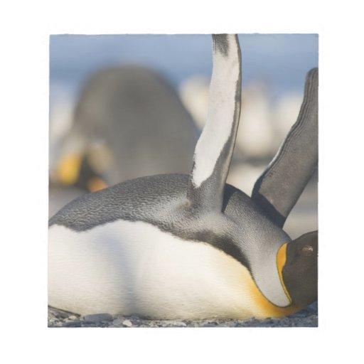 Antarctica, South Georgia Island (UK), King 16 Notepad