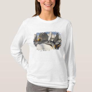 Antarctica, South Georgia Island (UK), King 16 T-Shirt