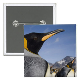 Antarctica, South Georgia Island UK), King 2 Button