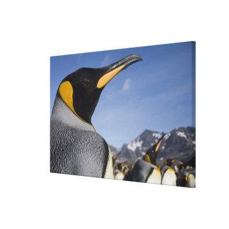 Antarctica, South Georgia Island UK), King 2 Canvas Print