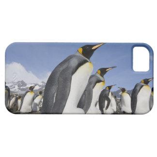 Antarctica, South Georgia Island (UK), King 2 iPhone 5 Cover
