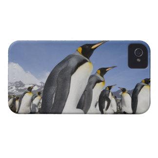 Antarctica, South Georgia Island (UK), King 2 iPhone 4 Cases
