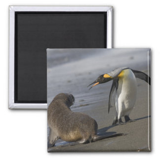 Antarctica, South Georgia Island (UK)King 2 Inch Square Magnet