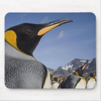 Antarctica, South Georgia Island UK), King 2 Mouse Pad