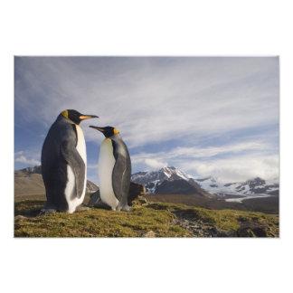 Antarctica South Georgia Island UK King 2 Art Photo