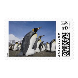 Antarctica, South Georgia Island (UK), King 2 Postage