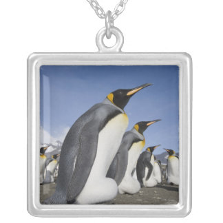 Antarctica, South Georgia Island (UK), King 2 Silver Plated Necklace