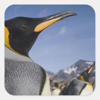Antarctica, South Georgia Island UK), King 2 Square Sticker