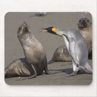 Antarctica, South Georgia Island (UK), King 3 Mouse Pad