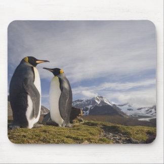Antarctica, South Georgia Island UK), King 3 Mousepad
