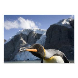 Antarctica South Georgia Island UK King 3 Photo