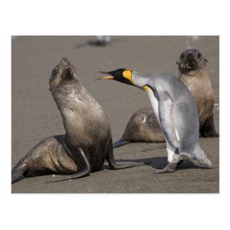 Antarctica South Georgia Island UK King 3 Post Card