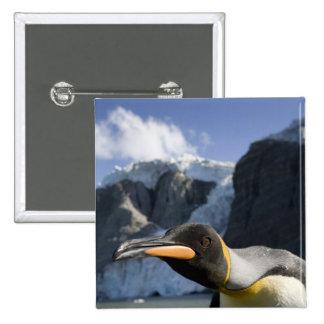 Antarctica, South Georgia Island UK), King 4 Pinback Buttons