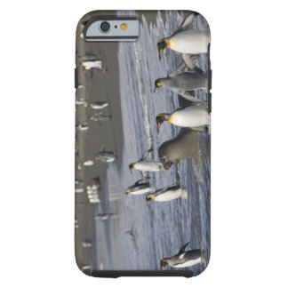 Antarctica, South Georgia Island (UK), King 4 Tough iPhone 6 Case