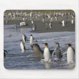 Antarctica, South Georgia Island (UK), King 4 Mouse Pad