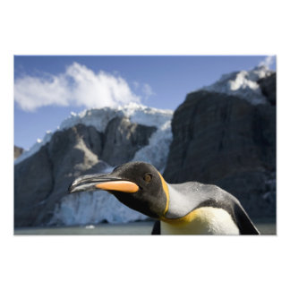 Antarctica South Georgia Island UK King 4 Photographic Print