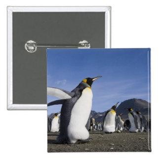 Antarctica, South Georgia Island (UK), King 5 Pinback Buttons