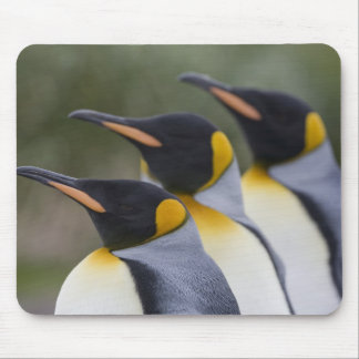 Antarctica, South Georgia Island UK), King 5 Mouse Pad