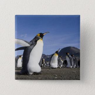 Antarctica, South Georgia Island (UK), King 5 Pinback Button