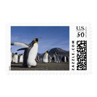 Antarctica, South Georgia Island (UK), King 5 Postage