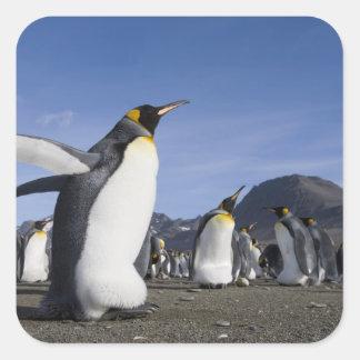 Antarctica, South Georgia Island (UK), King 5 Square Sticker