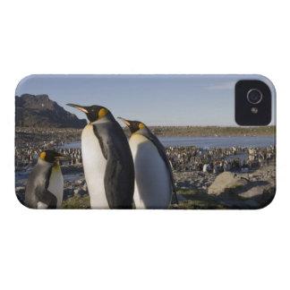 Antarctica, South Georgia Island (UK), King 6 iPhone 4 Case-Mate Case