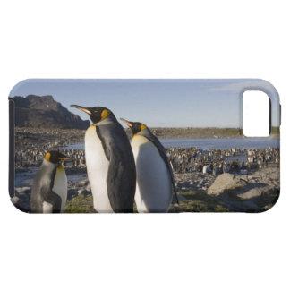 Antarctica, South Georgia Island (UK), King 6 iPhone 5 Cases