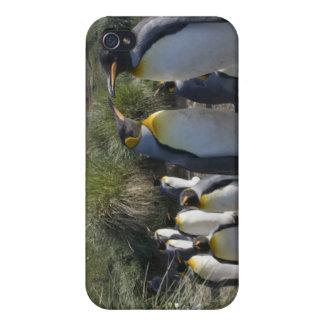 Antarctica, South Georgia Island UK), King 6 iPhone 4 Covers